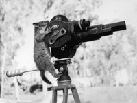 320px-A_possum_and_a_movie_camera_1943
