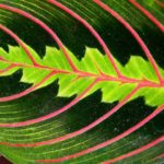 zoom in of green leaf with pink veins